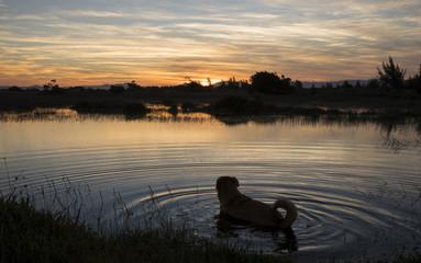 Cachorro ao pôr-do-sol
