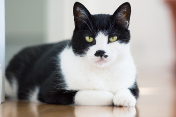 Black and White cat lying on the floor