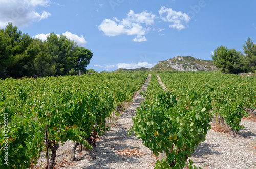Vineyard on the slope of a rocky hill in southern France Poster