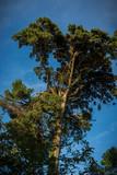 Paisaje portugués con bosques verdes - 177312379
