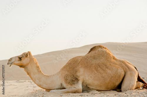 Fotobehang Abu Dhabi Fine art by Jen Badalamenti