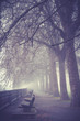 London Park im Herbst - 177327901