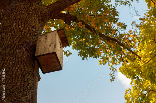 A wooden bird feeder in a park among trees with yellow fall foliage Poster