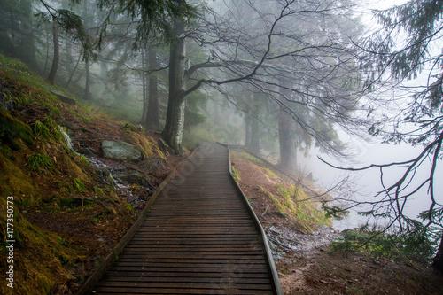 Fotobehang Weg in bos Mummelsee im Schwarzwald