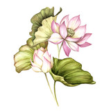 Composition with lotus. Hand draw watercolor illustration - 177355775