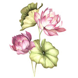 Composition with lotus. Hand draw watercolor illustration - 177355777