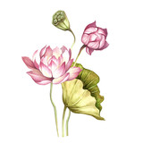 Composition with lotus. Hand draw watercolor illustration - 177355785