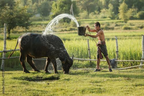 Fotobehang Guilin Farmers are bathing buffalo in rural areas.Asian farmers use buffalo to help with farming.