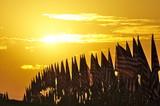 flags, in the sun's warm glow - 177370342