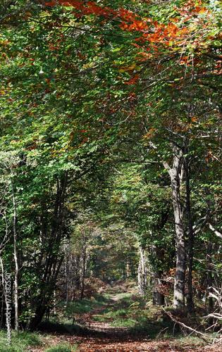 Papiers peints Route dans la forêt Chemin dans le parc régional naturel du Gâtinais français