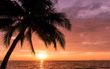 Silhouette coconut palm trees on beach with sunset sky. Vintage tone.summer concept background. Travel concept. - 177402907