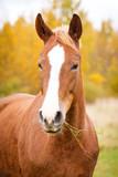 Horse on field - 177414148