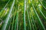 Arashiyama bamboo forest, Kyoto, Japan - 177422727
