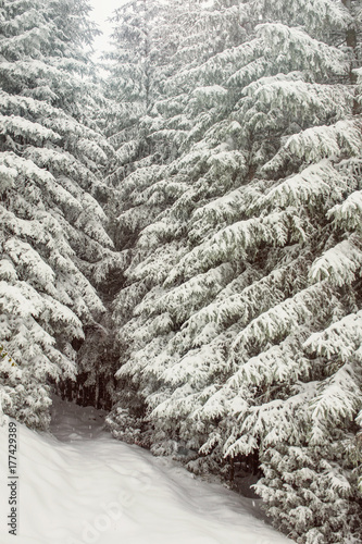 Fotobehang Betoverde Bos Enchanted forest entrance with snow covered trees