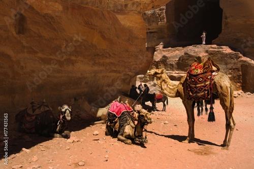 Fotobehang Kameel A group of camels waiting owner in front of Petra's Tomb, Jordan
