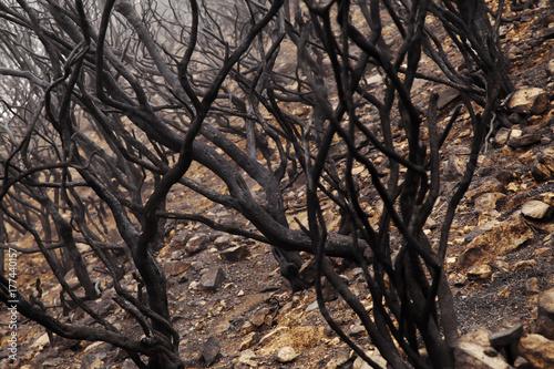 Foto op Plexiglas Canarische Eilanden Gran Canaria after forest fire