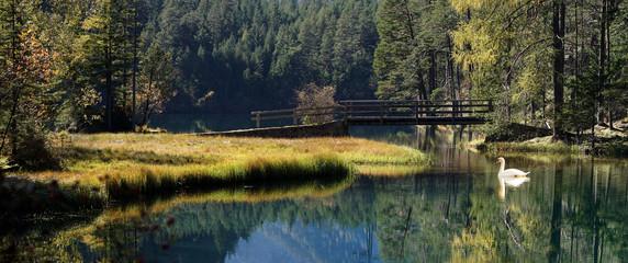 Swan at a small bridge in the mountain lake