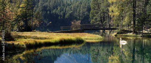 Foto op Plexiglas Bergen Swan at a small bridge in the mountain lake