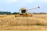 Mähdrescher fährt Ernte ein auf einem Getreidefeld, closeup