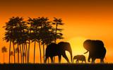 .    family of elephants