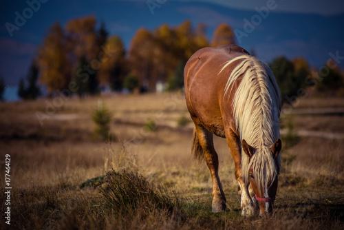 Grazing horse on mountain pasture © salajean