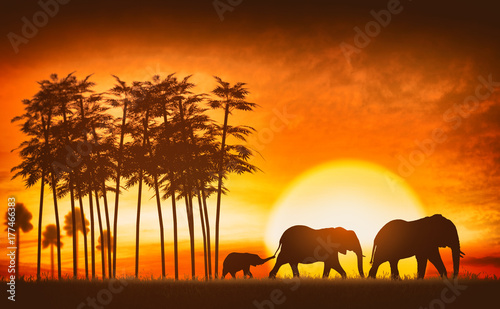 Fotobehang Overige family of elephants