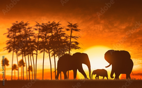 Fotobehang Rood paars family of elephants
