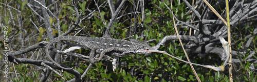 Fotobehang Kameleon Chamäleon schießt eine Gottesanbeterin (Chamaeleo africanus)