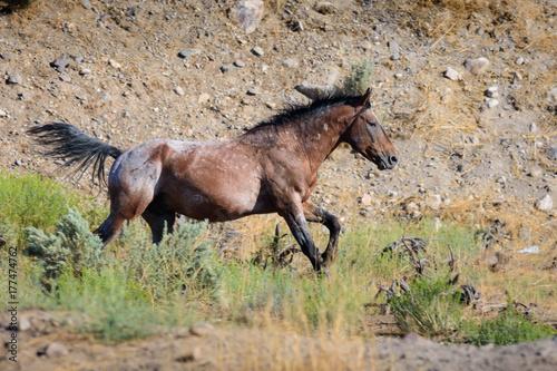 Desert Horse Running Plakát