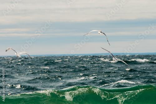Plakat Vibrant Seagulls in Flight Michigan Beach Shore