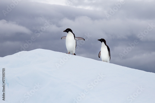 Fotobehang Antarctica Two Adelie Penguins on an Iceberg