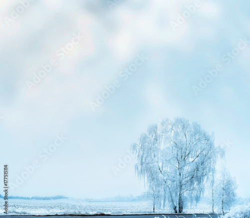 Fotobehang Lichtblauw Winter landscape with snow field and frosty tree at sky background