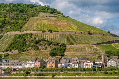 Fotobehang Wijngaard Vineyards at Rhine Valley in Germany
