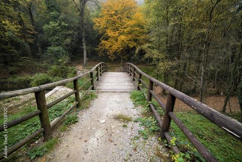 Fototapeta wooden walkway in the woods in autumn