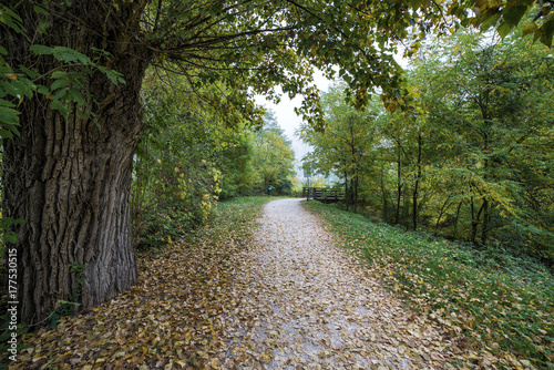 In de dag Herfst dirt road covered with autumn leaves in the midst of plants
