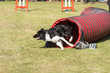 Border collie en agility - Belgium - 177562764