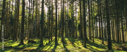 Bäume und Schatten - 177611390