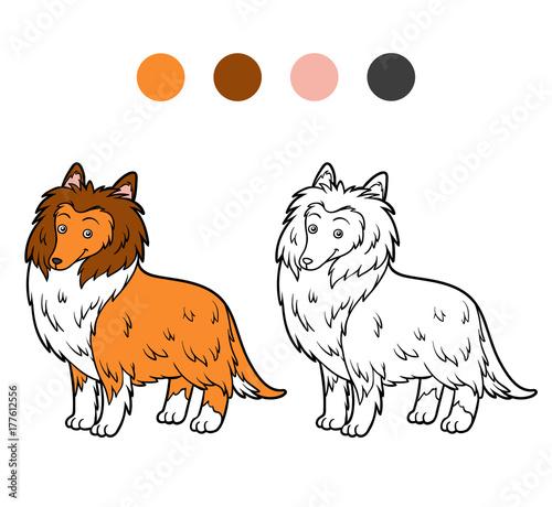 Deurstickers Babykamer Coloring book, Dog breeds: Collie