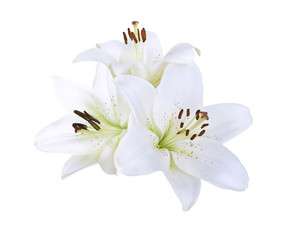 Lily white flowers