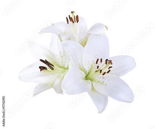 Lily białe kwiaty