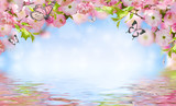 Flowers background with amazing spring sakura with butterflies. Flowers of cherries. - 177654120