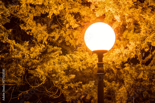 Luminous round street light on the background of conifer at night