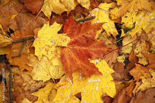 Foto op Canvas Baksteen Autumn leaves background