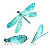 Set of dragonflies in watercolor - 177668311
