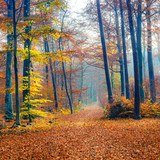 Pathway in the foggy autumn forest