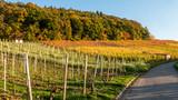 Weinberge im Herbst - 177678708