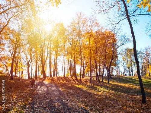 Papiers peints Automne Park with fallen leaves on a sunny autumn day