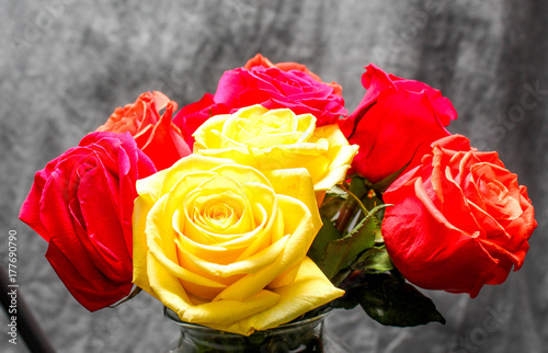 Fototapeta  Beautiful Colorful Roses