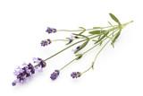 Lavender flowers. - 177696378