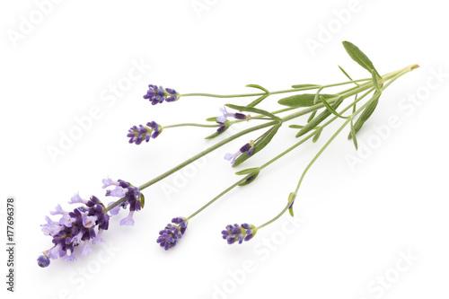 Papiers peints Lavande Lavender flowers.